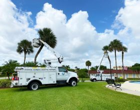 commercial-tree-service-south-florida