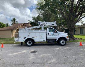 tree-trimming-service-florida-3