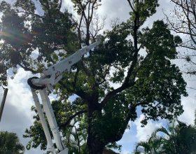 tree-trimming-service-florida-4