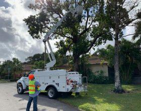 tree-trimming-service-florida-5