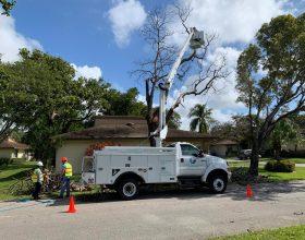 tree-trimming-service-florida-6