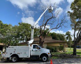 tree-trimming-service-florida-7