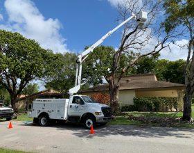 tree-trimming-service-florida-8