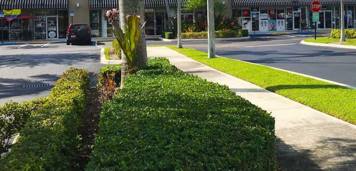Commercial landscaper in Boynton Beach, FL
